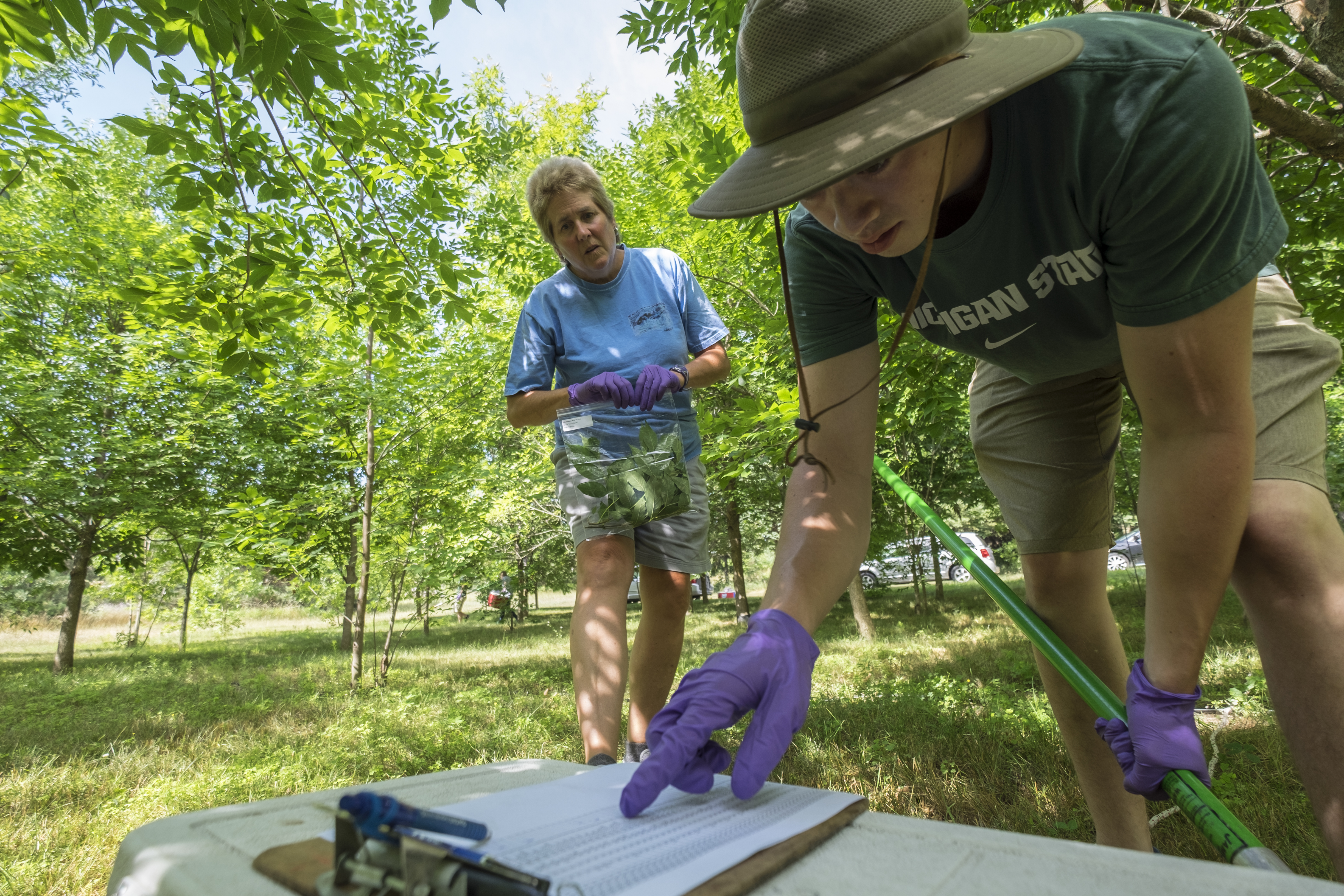MSU entomologist Deborah McCullough works with her students and staff during summer field work.