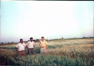 Byerlee0000042A_Byerlee_Colleagues_Wheat_Asia