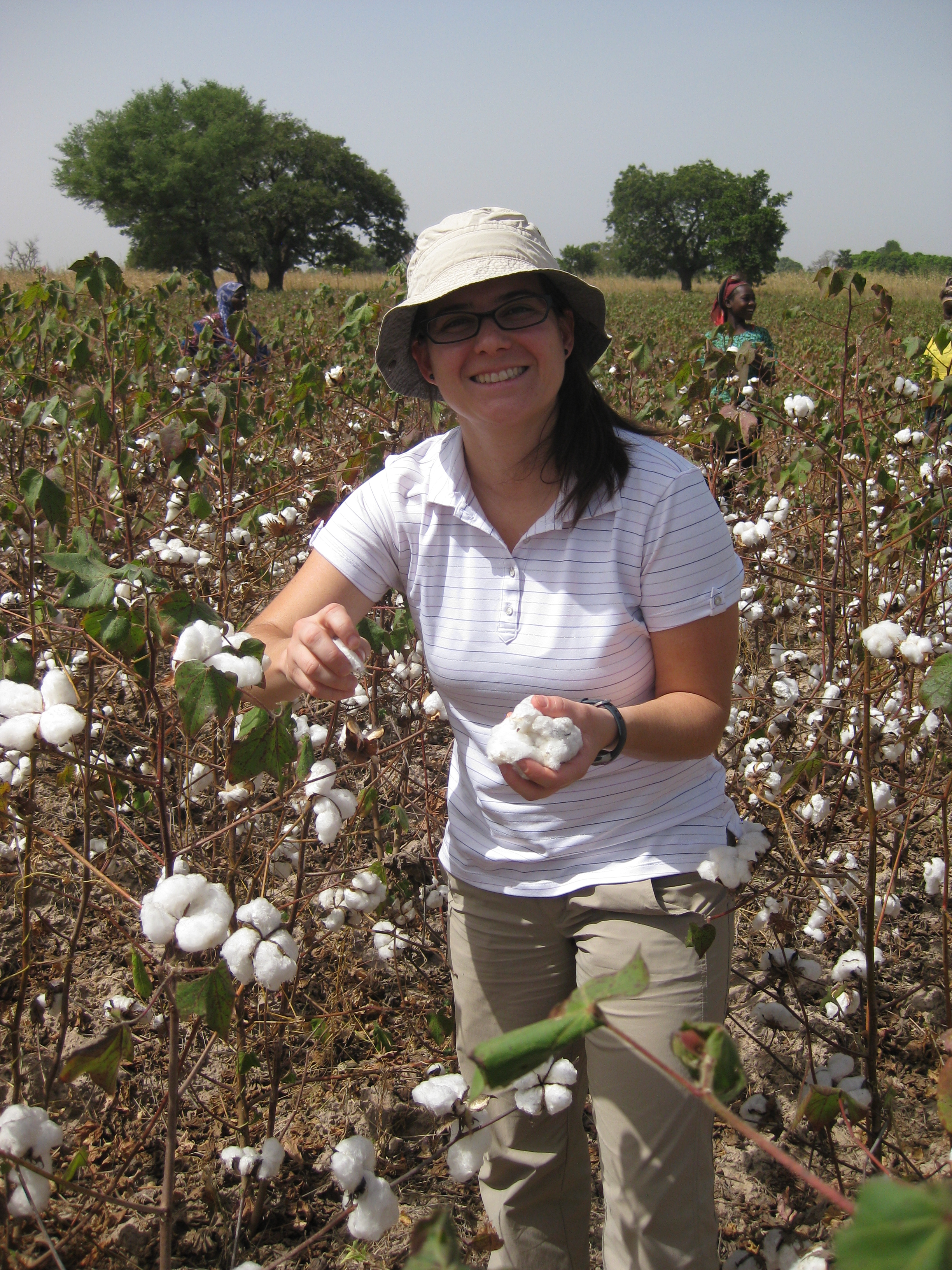 Vero_cotton field