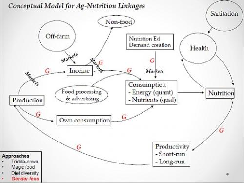 Conceptural model for agriculture and nutrition linkages