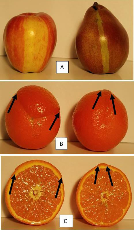 mutants-fruitexamples