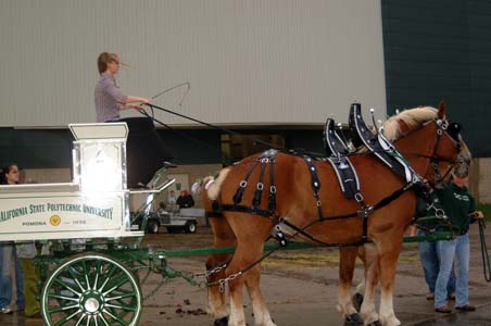 horses and wagon