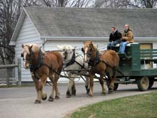horses (3) and wagon