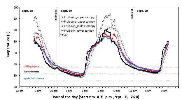 Graph of Honeycrisp fruit and air temperatures