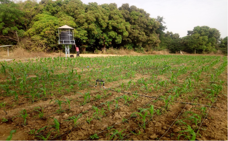 Solar Drip Irrigation System in Burkina Faso