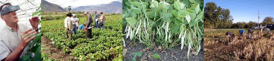 Dry Bean Breeding and Genetics Program