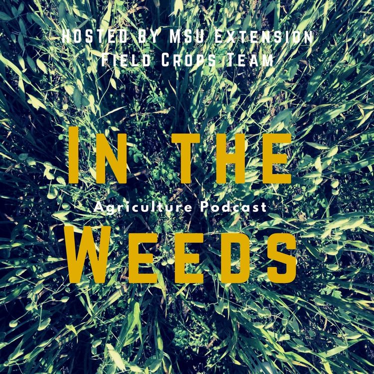New In the Weeds podcast