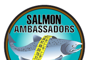 Four years of fishing data from Salmon Ambassadors show trends for wild, stocked salmon catch