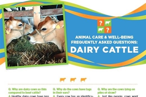 Poster with information on dairy cattle.