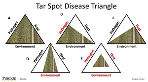 Tar spot disease triangle