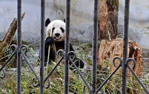 New science redefines remote -  even pandas global