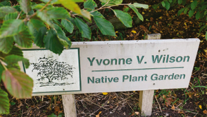 Yvonne Wilson: More than a donor, a legacy for MSU Horticulture Gardens