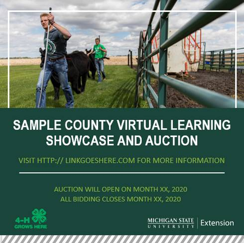 Two boys leading calves on a graphic that promote virtual learning showcase and auction experiences.