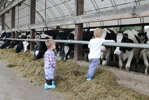 Two boys stepping on TMR to pet cows at Hood Farms Family Dairy.