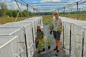 Researchers Luke Zehr and Andrea Glassmire tend tomato plants