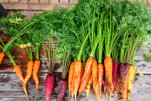 Carrots and the science behind them