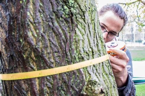 MSU Forestry student Andy Gordon measures a tree near the International Center.