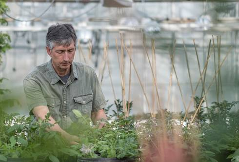 Dave Douches is the director of the MSU Potato Breeding and Genetics Program.