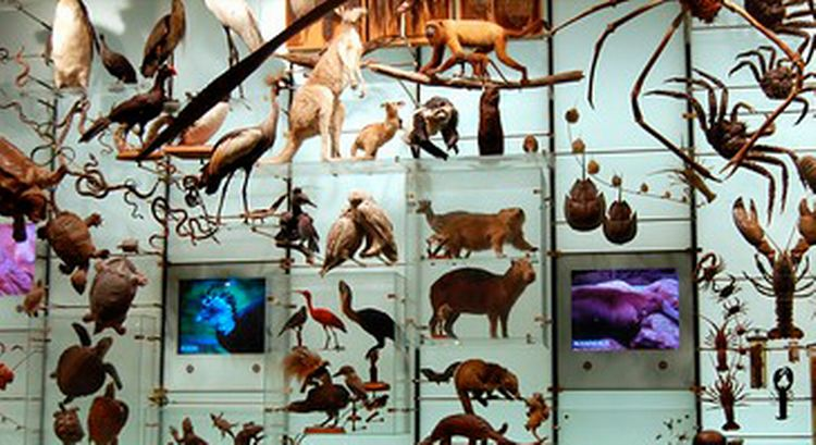 Museum biodiversity exhibit, by Davo via Creative Commons