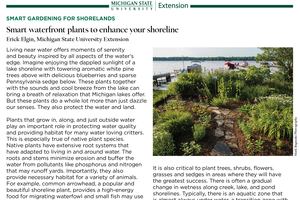 Smart Gardening for Shorelands: Smart Waterfront Plants to Enhance Your Shoreline