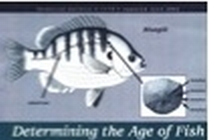 Determining the Age of Fish (E1774)