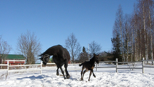 Horse owners use caution - icy conditions ahead!