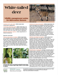 Photo of first page of White-tailed Deer article.