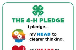 graphic relating to 4-h Pledge Printable identified as Clean 4-H Pledge posters - MSU Extension