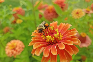 Pollinator health meetings to be held in Traverse City, Frankenmuth and West Olive