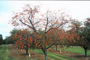 Planned gift funds tree fruit research and fellowship program