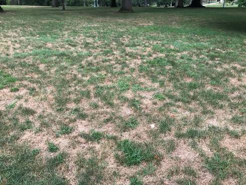 Image result for dead lawn