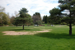 Damage to turfgrass caused by grubs. All photos by Kevin Frank, MSU.