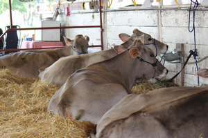 When livestock and fair food collide: Tips to keep you healthy