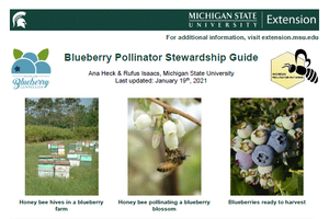 Blueberry Pollinator Stewardship Guide