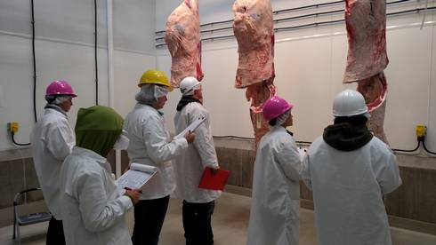 Contestants evaluate carcasses to determine yield and quality grades at the Michigan 4-H/FFA Meat Judging Contest.