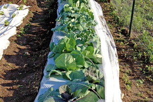 Integrated pest management in vegetable gardens