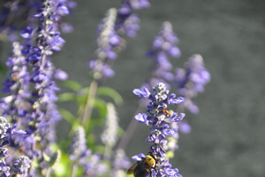 Learn how to make your garden more pollinator-friendly at the Manor House