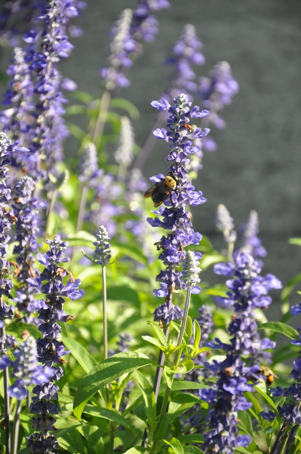 Phenomenal Learn How To Make Your Garden More Pollinator Friendly At Download Free Architecture Designs Rallybritishbridgeorg