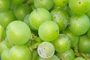 Detecting emerging pesticide resistance in grapes