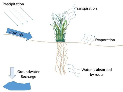Figure 1. Plant water cycle.