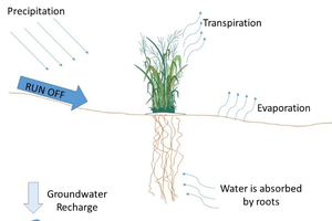 Water use of biomass crops
