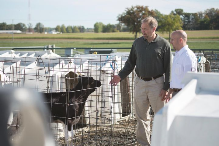 Ron Erskine (left) checks on cows.