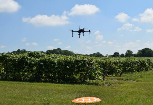 Drone flying over a field of grapes.