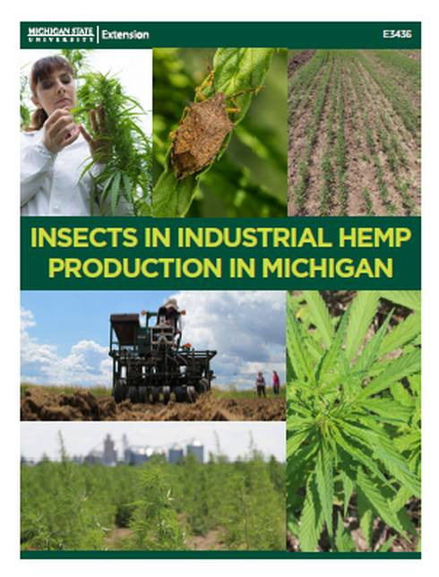 Thumbnail image of Insects in Industrial Hemp Production in Michigan document.