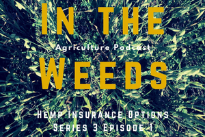 "Getting ""In the Weeds"" on hemp production in Michigan"