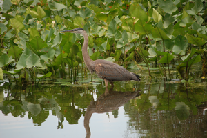 Visit the Bird Sanctuary for a morning guided birding walk