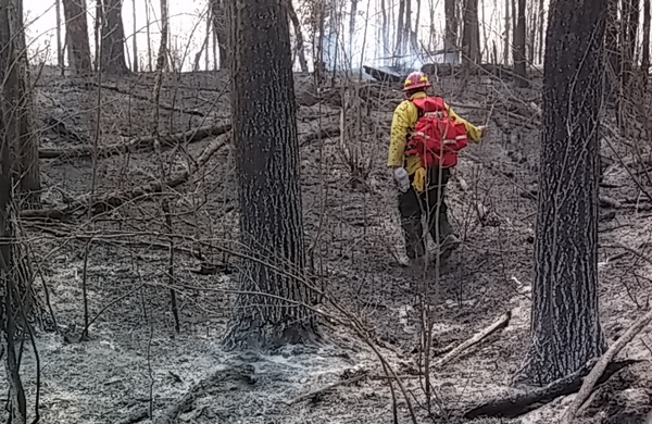 A forest after burning.