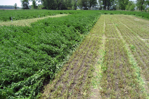 Excellent forage starts with planning, not the finished product: Variety selection