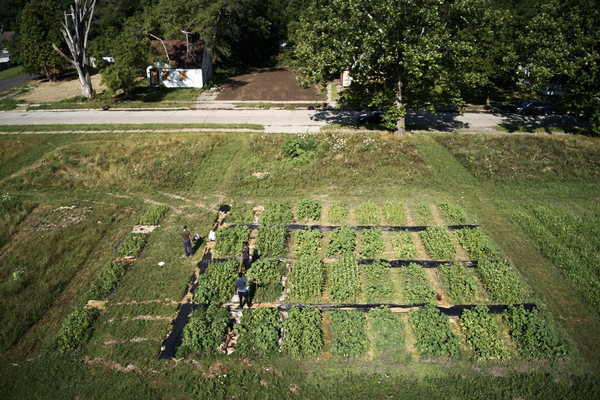 Drone view of urban soil research plots