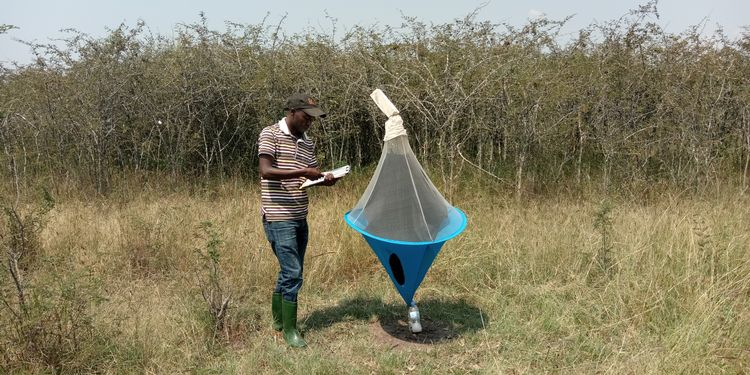 Richard Gashururu monitoring tsetse fly distribution.